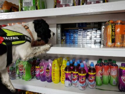 Sniffer dog looking for tobacco